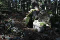 Stone in the forest Stock Image