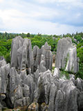 Stone Forest Horizon Royalty Free Stock Photos