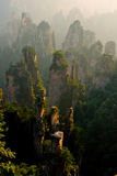 Stone forest misty Royalty Free Stock Images