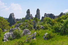 Stone Forest National Park Royalty Free Stock Images