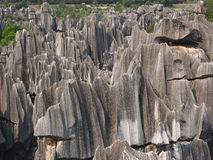 Stone forest national park Royalty Free Stock Image