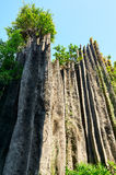 The stone forest Stock Photography