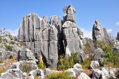 Stone Forest. The Stone Forest or Shilin is a notable set of limestone formations located in Shilin Yi Autonomous County, Yunnan Province, China Royalty Free Stock Images