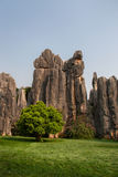 The Stone Forest Stock Photos