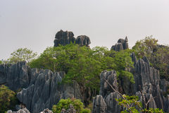 The Stone Forest Royalty Free Stock Photos