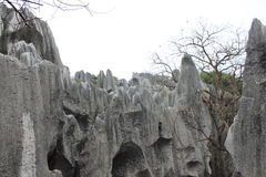 Stone forest Royalty Free Stock Images
