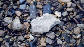 Stone on a forest trail royalty free stock photos