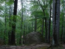 Stone in a forest. Between trees Stock Photography