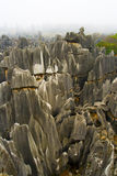 Stone Forest, Yunnan, China Royalty Free Stock Images