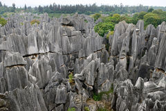 Stone Forest, Yunnan, China Royalty Free Stock Photo