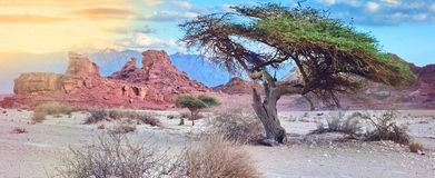 Stone formations in geological formation from Jurassic period in Timna park Royalty Free Stock Images