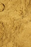 Stone Fossil Background. In sunlight Stock Photography