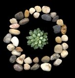 Stone frame. Succulent in round stone frame Stock Photos