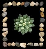 Stone frame. Succulent in square stone frame Royalty Free Stock Photos