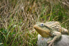 Stone frog on a grass and looking at camera royalty free stock photography