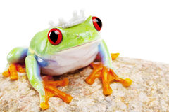 Stone Frog King! Royalty Free Stock Photos