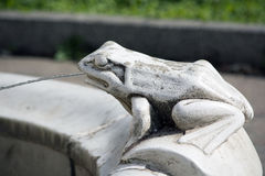 Stone frog Stock Photos