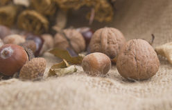 Stone fruits and dry flowers(Walnuts, acorns chestnuts) Royalty Free Stock Photography