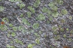 Stone with fungus Stock Photo