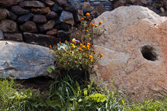 Stone garden Stock Photo