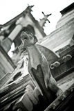 Stone Gargoyles of Notre Dame. In Paris, France Stock Photos