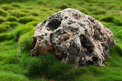 Stone on grass. Big  heavyweight stone on green grass Stock Image