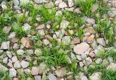 Stone and grass. Stock Photo