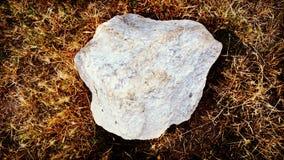 Stone on grass Stock Image