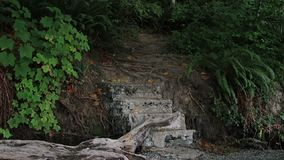 Stone filled stairs into woods. Stone and gravel path from rocky beach into dense forest stock footage