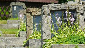 Stone graves with wild flowers Stock Image