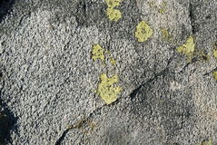 Stone gray with yellow lichen Stock Images