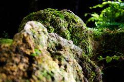 The stone and green moss Stock Photography