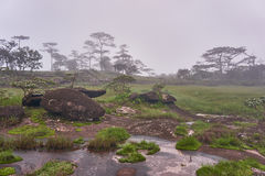 Stone ground at pine forest and morning fog, Bolaven, LAO Stock Photo