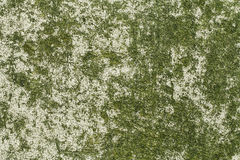 Stone Grunge Texture, Fungus, Mold Stock Photography