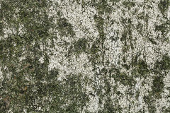 Stone grunge texture, fungus, mold Stock Photo