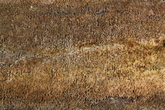 Stone grunge texture, fungus, mold Royalty Free Stock Photos