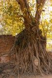 Stone head of Buddha Royalty Free Stock Photo