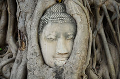 Stone head of buddha in root tree of Wat Mahathat Stock Photos
