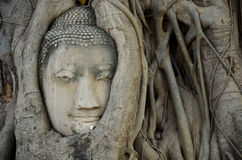 Stone head of buddha in root tree of Wat Mahathat Royalty Free Stock Images
