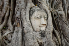 Stone head of buddha in root tree of Wat Mahathat Royalty Free Stock Photography