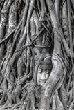 Head of Buddha Statue in the Tree Roots at Wat Mahathat, Ayutthaya, Thailand stock image