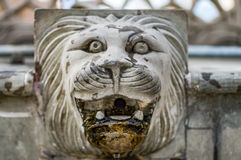 Stone head of lion for water Stock Photography