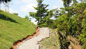 Stone hiking path road in the mountains with green grass and pine trees. Hike beautiful road Royalty Free Stock Image