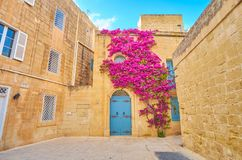 The colorful plant on the house`s wall, Mdina, Malta stock images