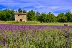 Stone house among lavender fields, Provence, France. Small stone house among the lavender fields of Provence, France with vibrant blue sky Royalty Free Stock Image
