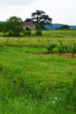 Stone house & vine yard, France Stock Image