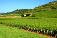 Stone house among vineyards in Burgundy, France. Stone house among the green vineyards of Burgundy, France Royalty Free Stock Images