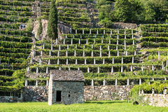 Stone house and vineyards, Pont Saint Martin (Italy) Stock Photo