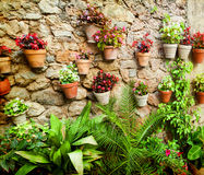 Stone house wall with flowers Stock Images