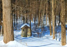 Stone House in Woods Snow. An old spring house  and trees on a long abandoned farm Stock Photos